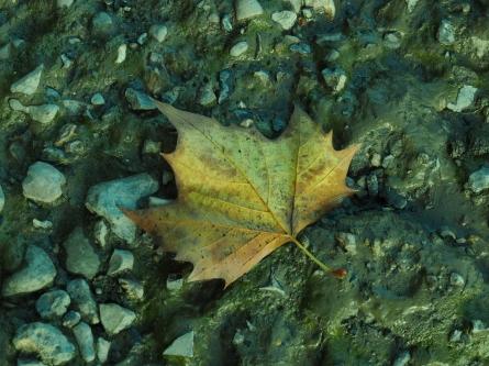 Grand Union Canal Leaf