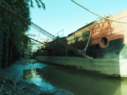 f.8 1/80s 14mm ISO200 Grand Union Canal Leaf
